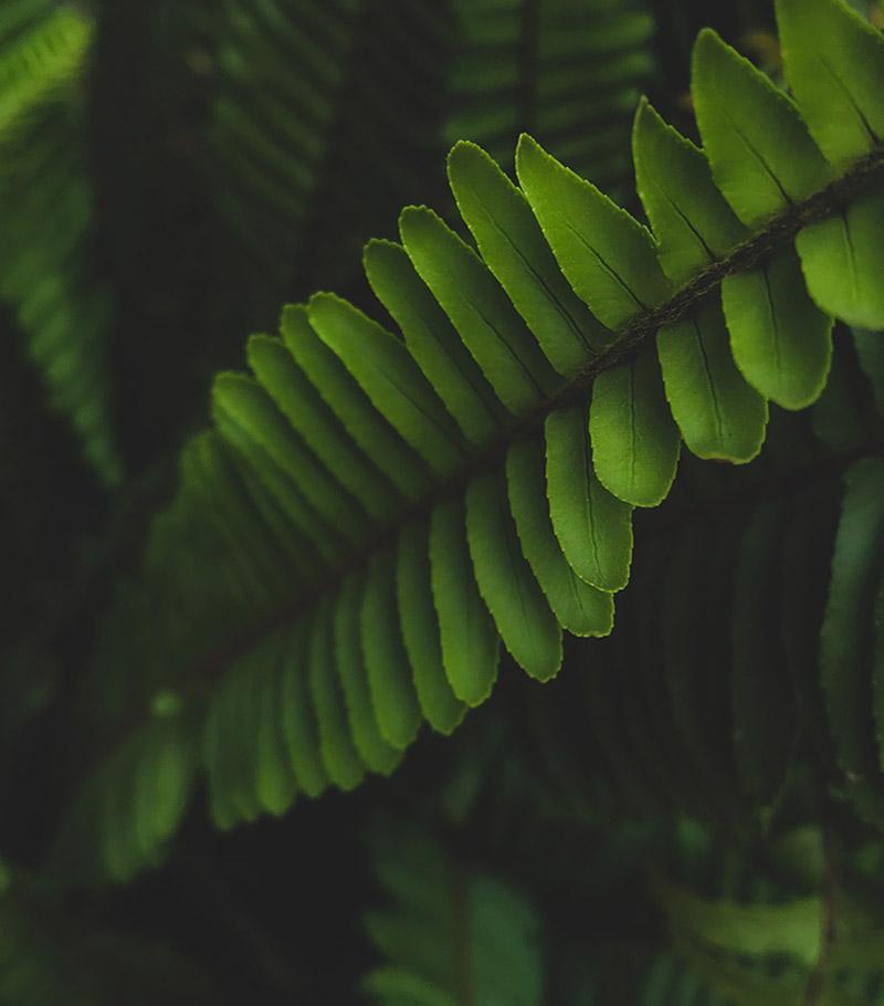 Botanic intro